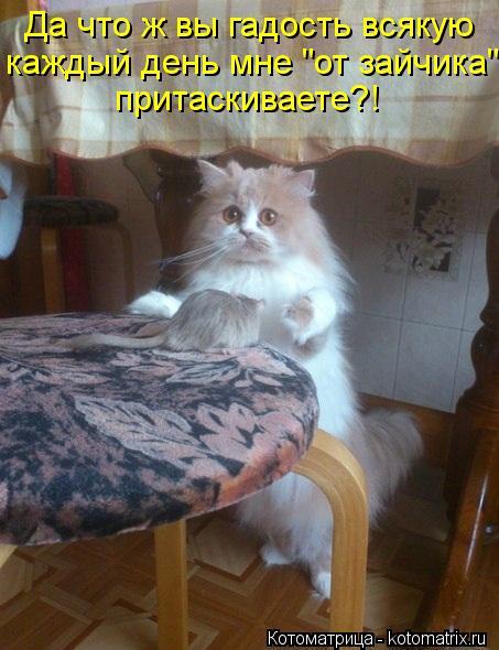 kotomatritsa_qY.jpg