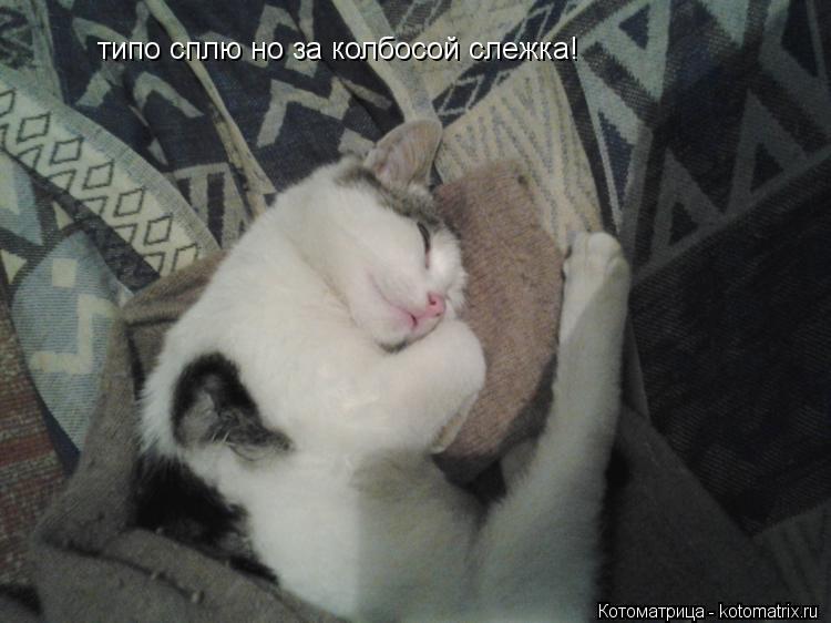 Котоматрица: типо сплю но за колбосой слежка!