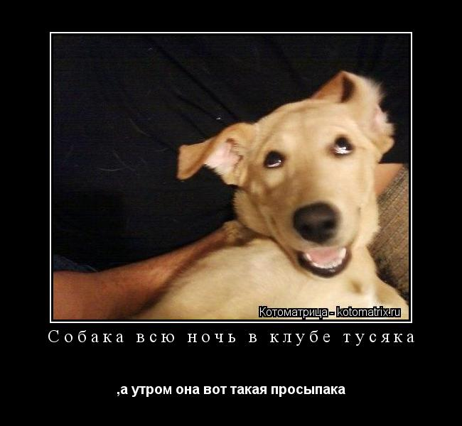 Котоматрица: Собака всю ночь в клубе тусяка ,а утром она вот такая просыпака
