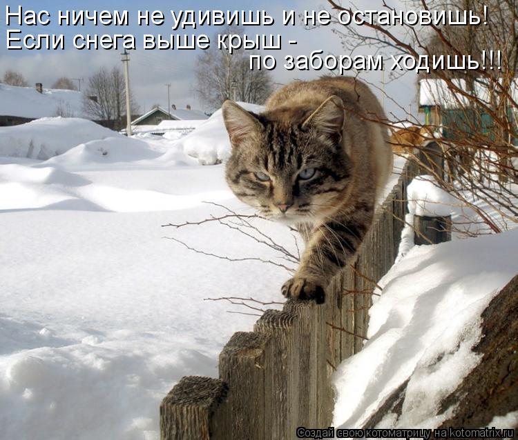 Котоматрица: Нас ничем не удивишь и не остановишь! Если снега выше крыш -  по заборам ходишь!!!