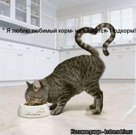 "Котоматрица: "" Я люблю любимый корм- называется- Подкорм!!!"""