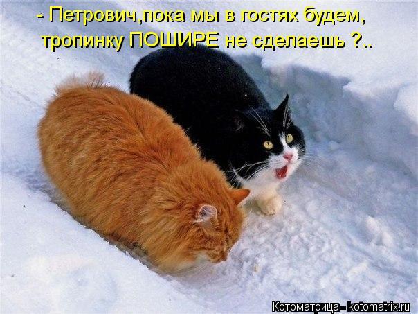 Котоматрица: - Петрович,пока мы в гостях будем, тропинку ПОШИРЕ не сделаешь ?..