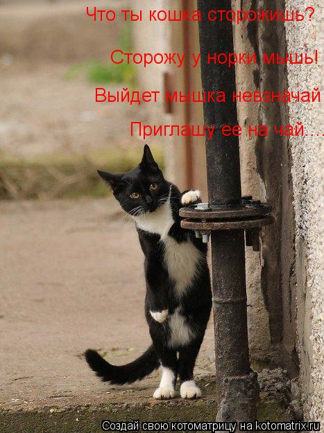 Котоматрица: Что ты кошка сторожишь? Сторожу у норки мышь! Выйдет мышка невзначай Приглашу ее на чай....