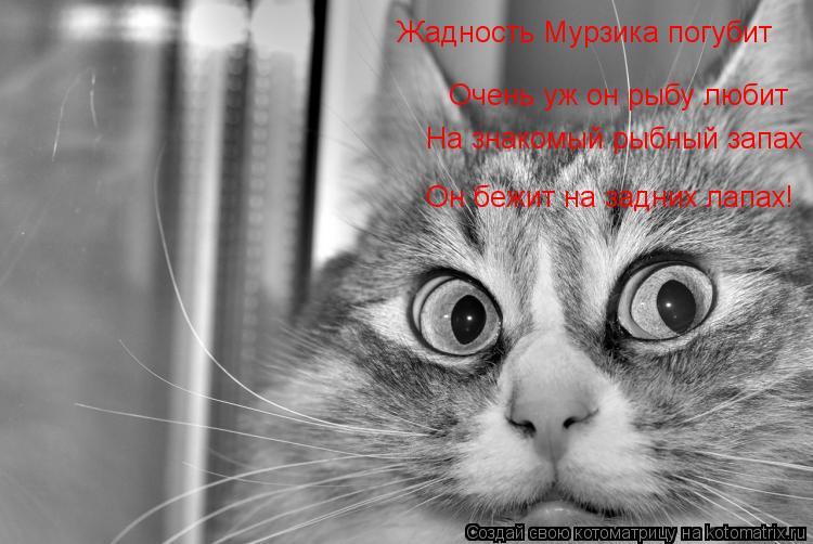 Котоматрица: Жадность Мурзика погубит Очень уж он рыбу любит На знакомый рыбный запах Он бежит на задних лапах!