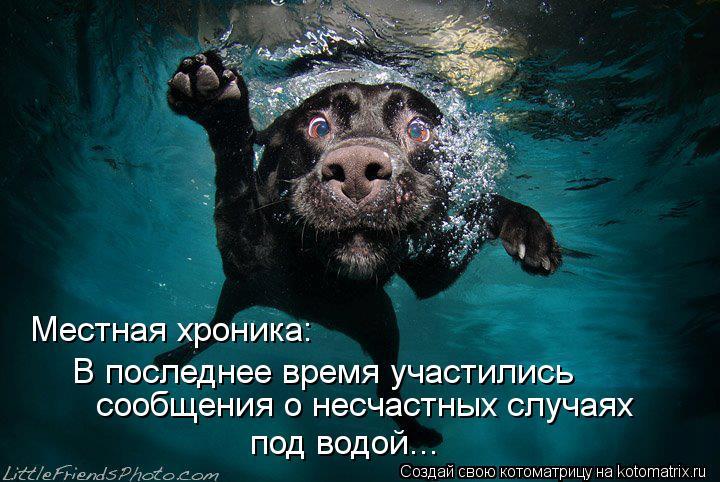 Котоматрица: Местная хроника: В последнее время участились под водой... сообщения о несчастных случаях