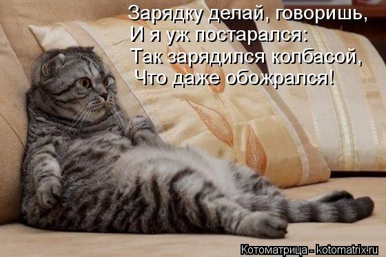 Котоматрица: Зарядку делай, говоришь, И я уж постарался:  Так зарядился колбасой,  Что даже обожрался!