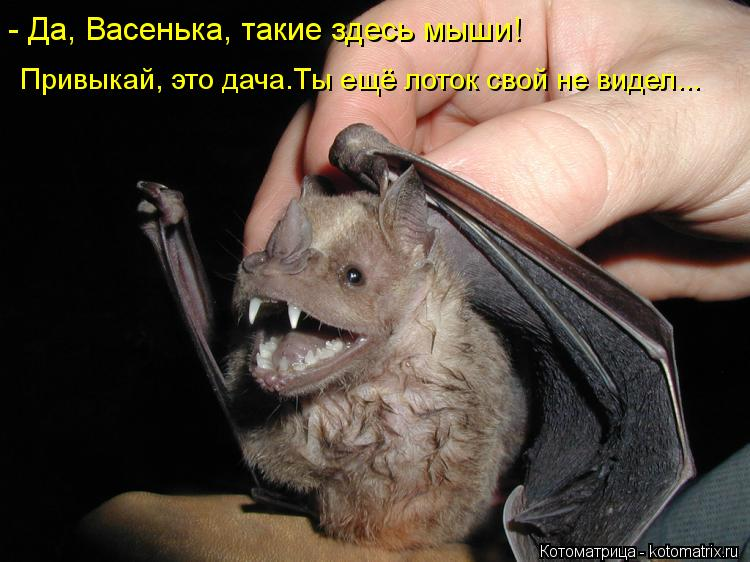 Котоматрица: - Да, Васенька, такие здесь мыши! Привыкай, это дача.Ты ещё лоток свой не видел...