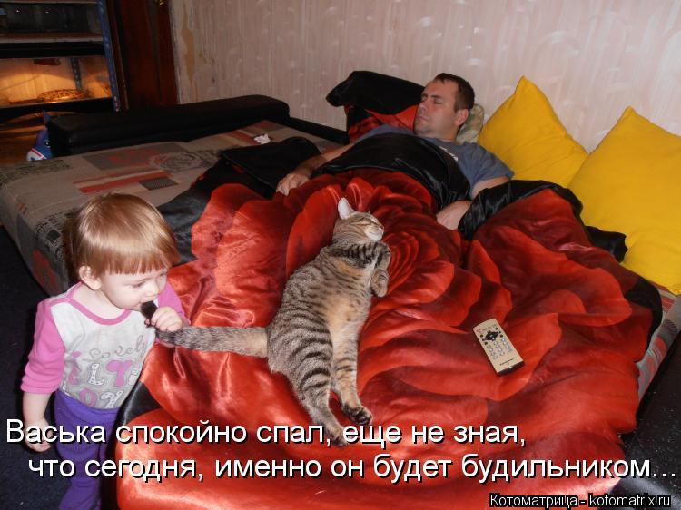 Котоматрица: что сегодня, именно он будет будильником...  Васька спокойно спал, еще не зная,
