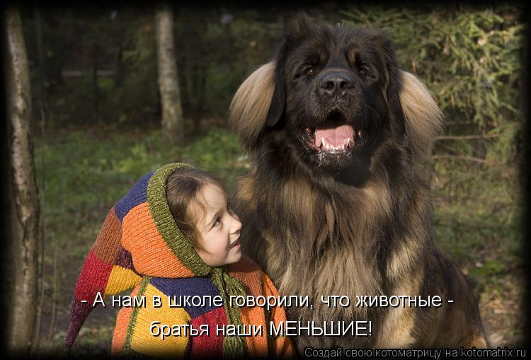 Котоматрица: - А нам в школе говорили, что животные - братья наши МЕНЬШИЕ!