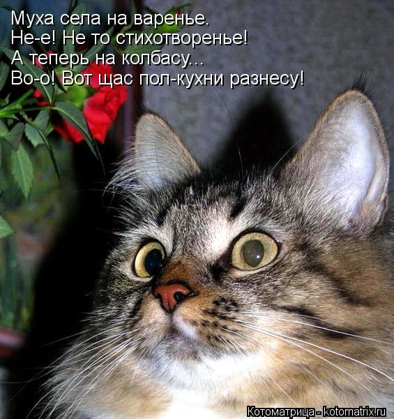 Котоматрица: Муха села на варенье.  Не-е! Не то стихотворенье! А теперь на колбасу... Во-о! Вот щас пол-кухни разнесу!