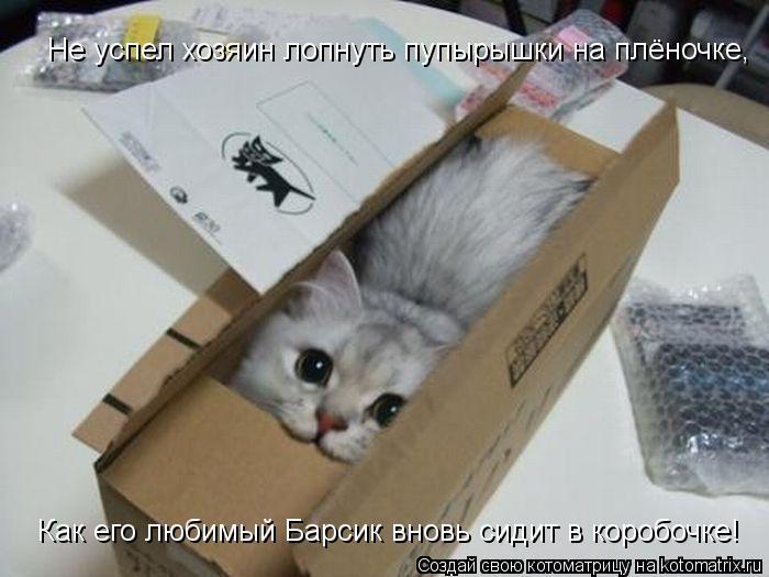 Котоматрица: Не успел хозяин лопнуть пупырышки на плёночке, Как его любимый Барсик вновь сидит в коробочке!