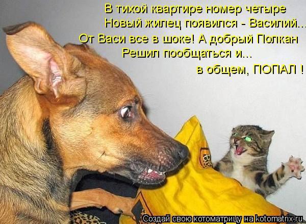Котоматрица: В тихой квартире номер четыре  Новый жилец появился - Василий... От Васи все в шоке! А добрый Полкан Решил пообщаться и... в общем, ПОПАЛ !