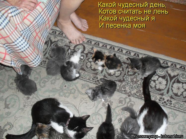 Котоматрица: Какой чудесный день, Котов считать не лень Какой чудесный я И песенка моя