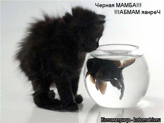 Котоматрица: Черная МАМБА!!! !!!АБМАМ яанреЧ