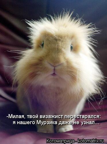 Котоматрица: -Милая, твой визажист перестарался: я нашего Мурзика даже не узнал...