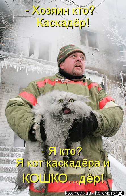 Котоматрица: Каскадёр! - Я кто? Я кот каскадёра и КОШКО...дёр! - Хозяин кто?
