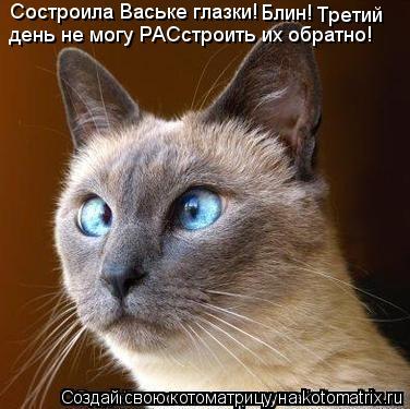 Котоматрица: Состроила Ваське глазки! Блин! Третий день не могу РАСстроить их обратно!