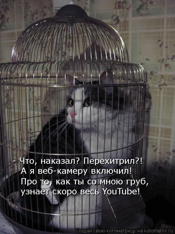 Котоматрица: - Что, наказал? Перехитрил?! А я веб-камеру включил! Про то, как ты со мною груб, узнает скоро весь YouTube!