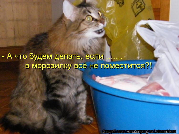 Котоматрица: - А что будем делать, если ....... в морозилку всё не поместится?!
