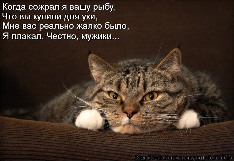 Котоматрица: Когда сожрал я вашу рыбу, Что вы купили для ухи, Мне вас реально жалко было,  Я плакал. Честно, мужики...