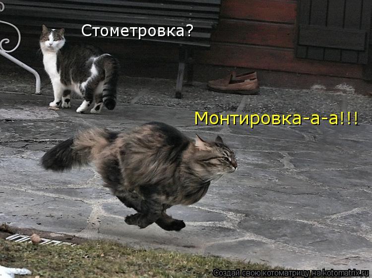 Котоматрица: Стометровка? Монтировка-а-а!!!