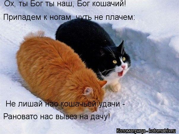 Котоматрица: Ох, ты Бог ты наш, Бог кошачий! Припадем к ногам, чуть не плачем: Не лишай нас кошачьей удачи -  Рановато нас вывез на дачу!