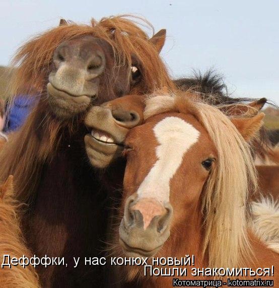 Котоматрица: Дефффки, у нас конюх новый!  Пошли знакомиться!