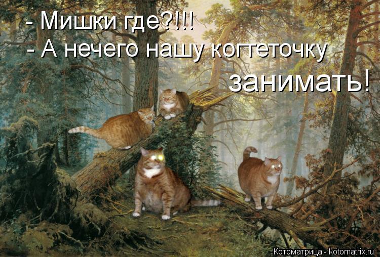 Котоматрица: - А нечего нашу когтеточку  занимать! - Мишки где?!!!