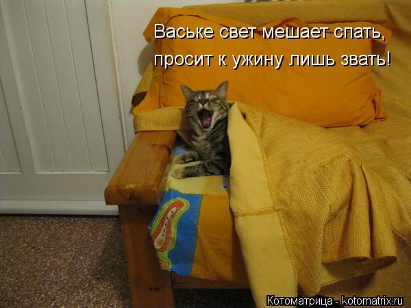 Котоматрица: Ваське свет мешает спать, просит к ужину лишь звать!