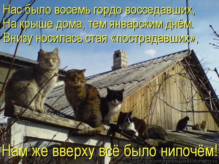 Котоматрица: Нас было восемь гордо восседавших,  На крыше дома, тем январским днём. Внизу носилась стая «пострадавших», Нам же вверху всё было нипочём!