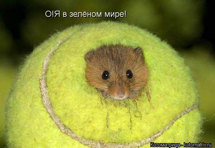 Котоматрица: О!Я в зелёном мире!