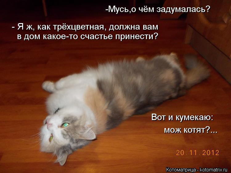 Котоматрица: -Мусь,о чём задумалась? мож котят?... в дом какое-то счастье принести? Вот и кумекаю:  - Я ж, как трёхцветная, должна вам