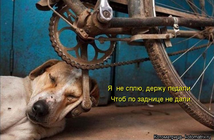Котоматрица: Я  не сплю, держу педали Чтоб по заднице не дали.