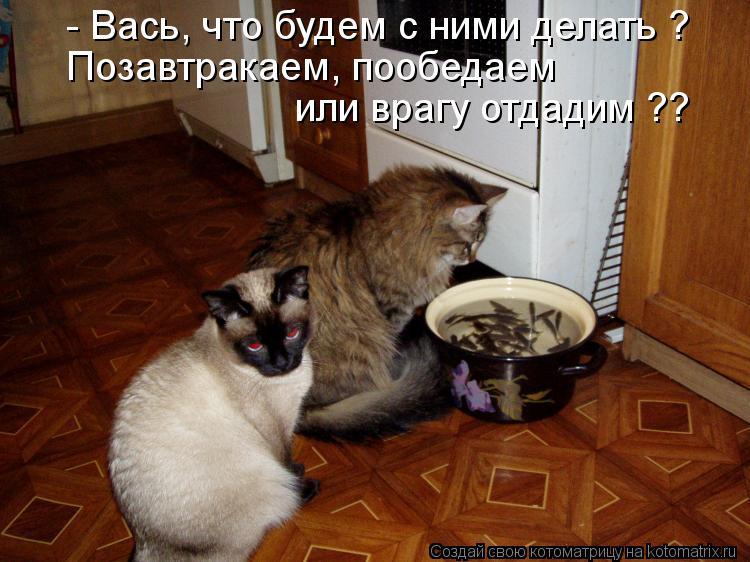 Котоматрица: - Вась, что будем с ними делать ? Позавтракаем, пообедаем или врагу отдадим ??