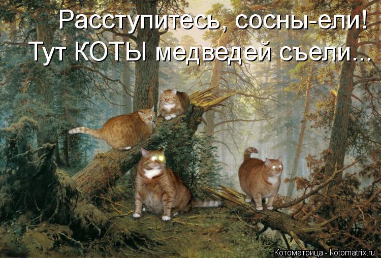 Котоматрица: Расступитесь, сосны-ели! Тут КОТЫ медведей съели...