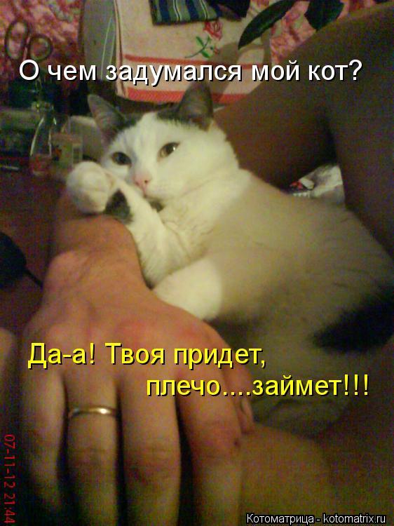 Котоматрица: О чем задумался мой кот? Да-а! Твоя придет, плечо....займет!!!