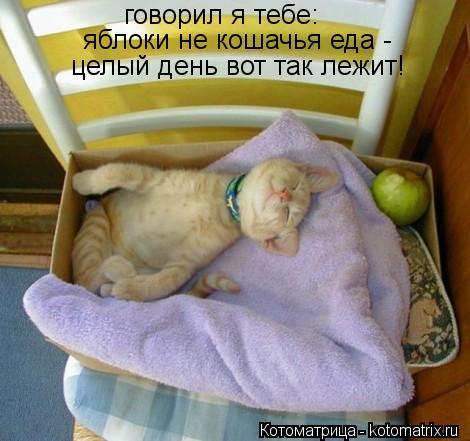 Котоматрица: говорил я тебе: яблоки не кошачья еда -  целый день вот так лежит!