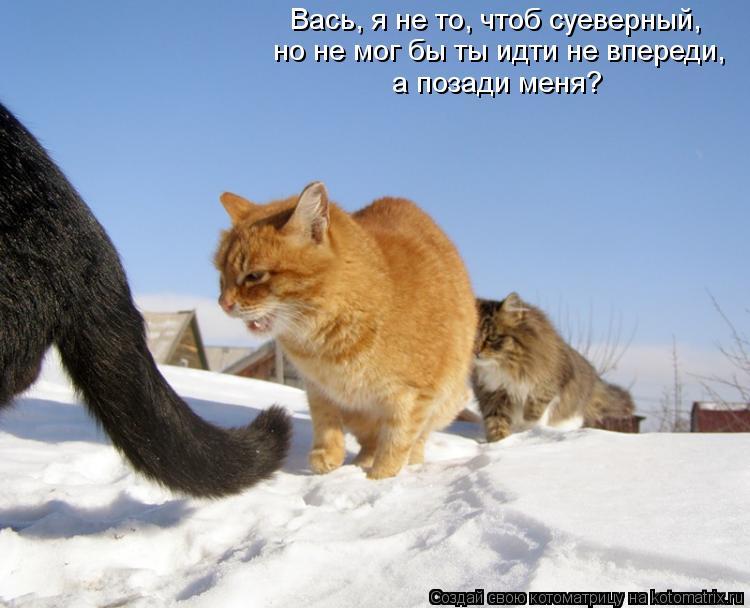 Котоматрица: Вась, я не то, чтоб суеверный, но не мог бы ты идти не впереди, а позади меня?
