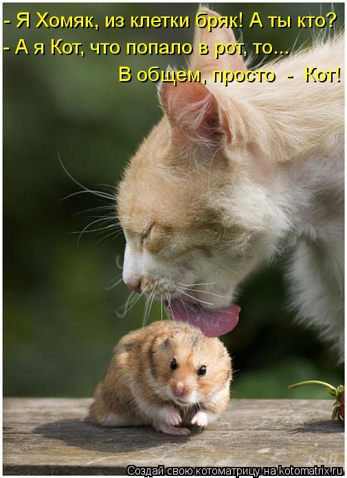 Котоматрица: - Я Хомяк, из клетки бряк! А ты кто? - А я Кот, что попало в рот, то... В общем, просто  -  Кот!