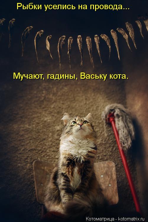 Котоматрица: Рыбки уселись на провода... Мучают, гадины, Ваську кота.
