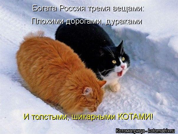 Котоматрица: Богата Россия тремя вещами: Плохими дорогами, дураками И толстыми, шикарными КОТАМИ!