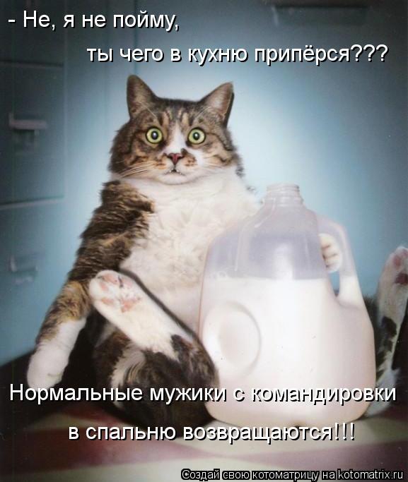 Котоматрица: - Не, я не пойму,  ты чего в кухню припёрся??? Нормальные мужики с командировки в спальню возвращаются!!!