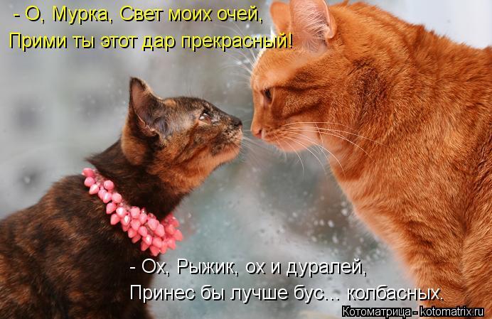Котоматрица: - О, Мурка, Свет моих очей, Прими ты этот дар прекрасный! Принес бы лучше бус... колбасных. - Ох, Рыжик, ох и дуралей,