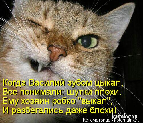 Котоматрица: Когда Василий зубом цыкал, Все понимали: шутки плохи. Ему хозяин робко