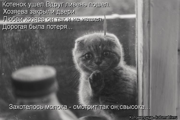 Котоматрица: Котенок ушел.Вдруг ливень пошел. Хозяева закрыли двери. Любви хозяев он так и не нашел. Дорогая была потеря... Захотелось молока - смотрит так