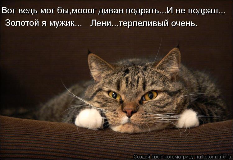 Котоматрица: Вот ведь мог бы,мооог диван подрать...И не подрал... Золотой я мужик... Лени...терпеливый очень.