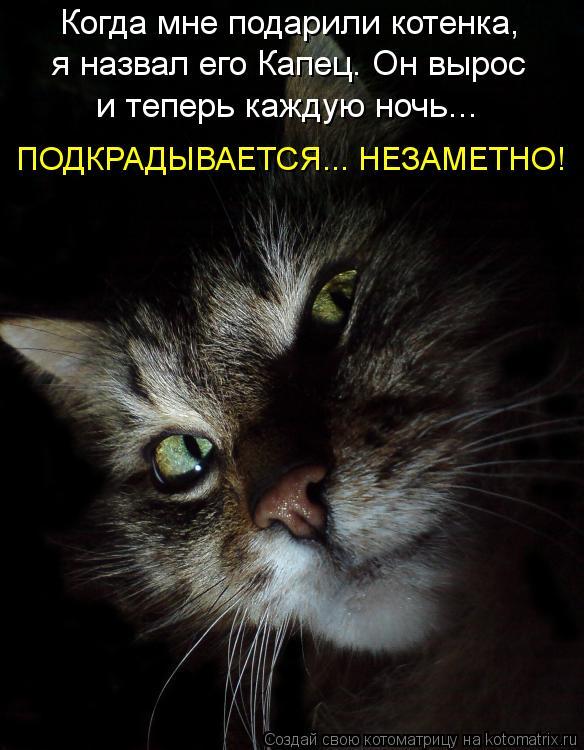 Котоматрица: Когда мне подарили котенка, я назвал его Капец. Он вырос и теперь каждую ночь... ПОДКРАДЫВАЕТСЯ... НЕЗАМЕТНО!