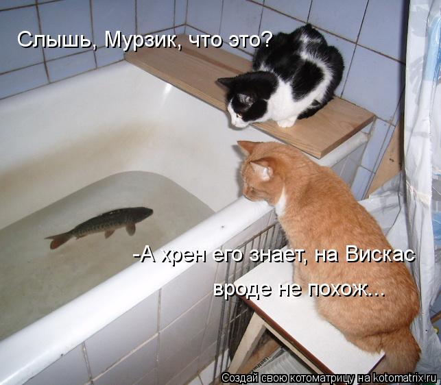 Котоматрица: Слышь, Мурзик, что это? -А хрен его знает, на Вискас вроде не похож...