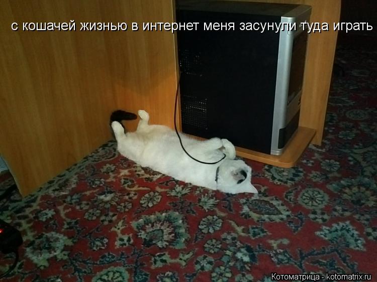 Котоматрица: с кошачей жизнью в интернет меня засунули туда играть