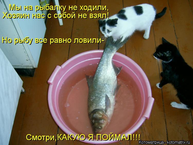 Котоматрица: Мы на рыбалку не ходили, Хозяин нас с собой не взял! Но рыбу все равно ловили- Смотри,КАКУЮ Я ПОЙМАЛ!!!
